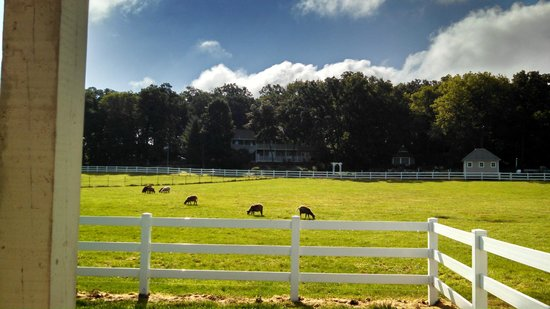 The Speckled Hen Inn: Pasture in front of the Inn