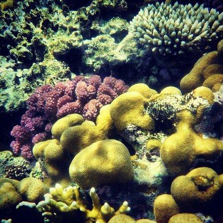 Otium Hotel Aloha: the reef