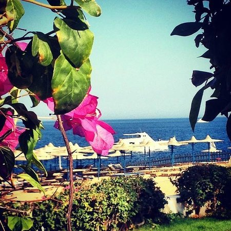 Otium Hotel Aloha: the view