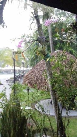 Riande Aeropuerto: ruisende regen in de binnentuin - altijd maar kort