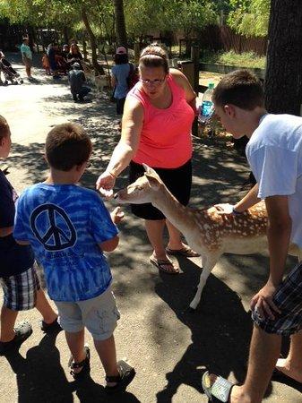 York's Wild Kingdom Zoo and Fun Park: Feeding the deer