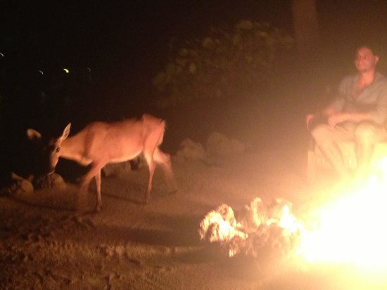 Little Palm Island Resort & Spa, A Noble House Resort: Pit fire & friendly deers at night