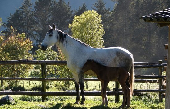 Hacienda Zuleta : Horses on the Grounds