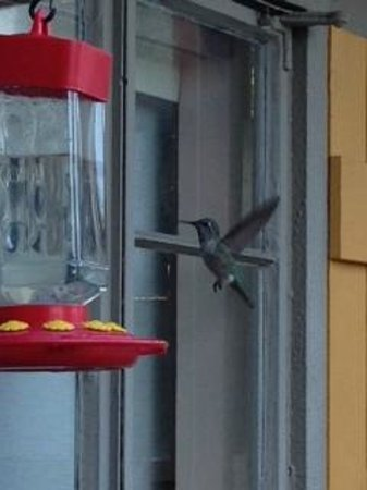 ZenYard Uptown Inn: Hummingbirds outside the breakfast nook