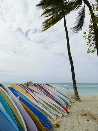 Kuhio Beach: Escuela de surf