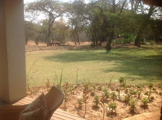 Lilayi Lodge: waterbuck outside our chalet