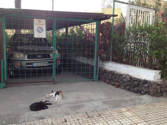 Paraiso del Sol Apartments: Katzenfütterung an der Anlage