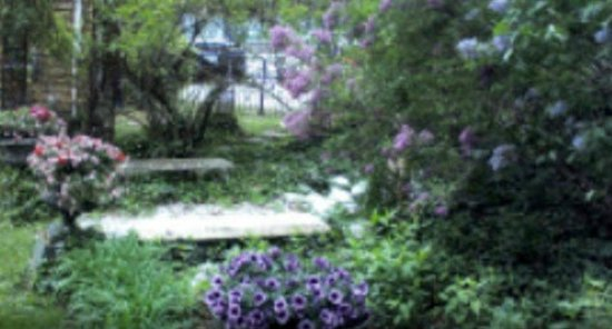 Charles Inn: Lilacs blooming in garden