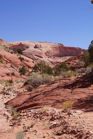 Wire Pass Canyon Trail im Vermilion Cliffs National Monument
