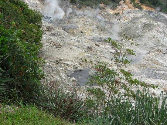 Sulphur Springs: The Springs