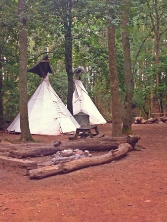Hollybush Inn & Campsite: Tipis