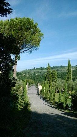 B&b Ulivi di Castello : paesaggio che circonda la villa
