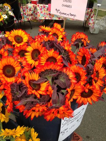 Boulder County Farmers Market: Lots & lots of beautiful flowers