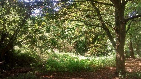 Mote Park: View