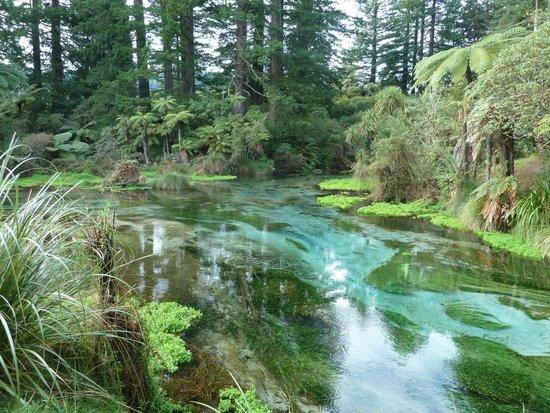 Hamurana Springs: Hamurana steam
