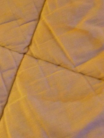 Embassy Suites by Hilton Tampa - Airport/Westshore: URINE STAINS ON MATTRESS COVER