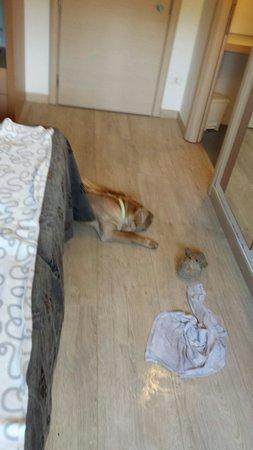 Relais Bellaria Hotel & Congressi: In camera con il nostro cane
