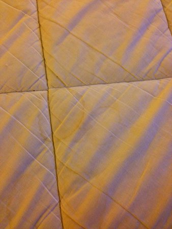 Embassy Suites by Hilton Tampa - Airport/Westshore: URINE STAINS ON MATTRESS COVERS