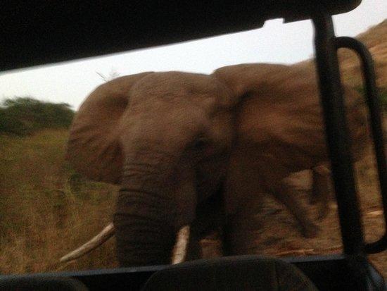 Zulu Nyala Heritage Safari Lodge: Up close and personal