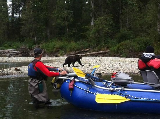 Kynoch Adventures: Grizzly checking out the boat