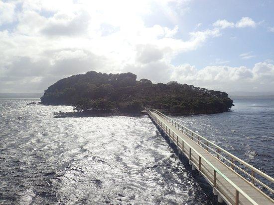 World Heritage Cruises: Gordon River