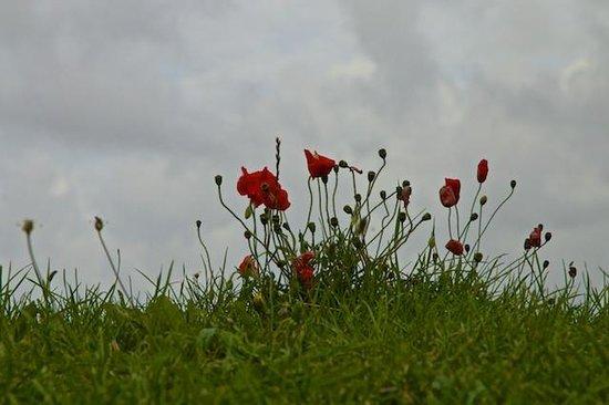 Great War Battlefields Tour: Poppies on Flanders field