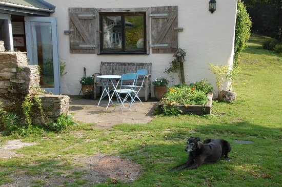 Bere Alston, UK: Our dog takes a break