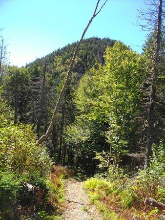 Cape Chignecto Provincial Park: There are hills to climb