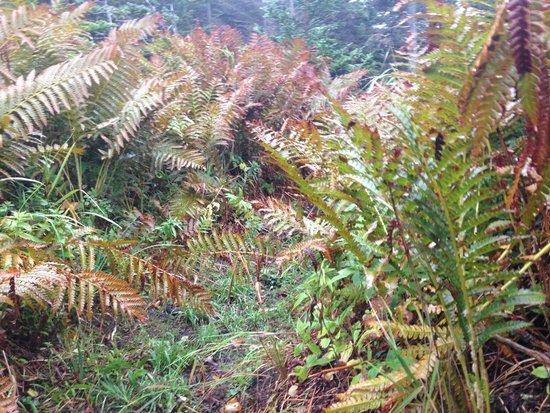 Cape Chignecto Provincial Park: After the rains, coastal meadows