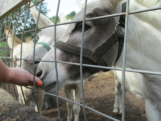 Briarwood Auto Safari: Nibbling