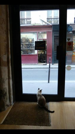 Le Cafe des Chats: On the lookout.