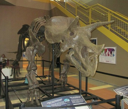 East Tennessee Natural History Museum