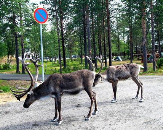 Holiday Club Saariselka: Окружение