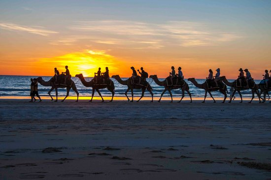 Cable Beach : camels 3
