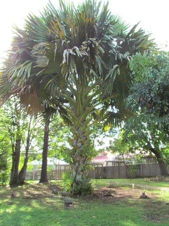 Conservatoire Botanique des Iles de Guadeloupe