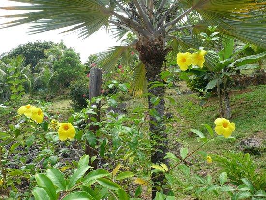 Coco de Mer - Black Parrot Suites : Hotel flowergarden