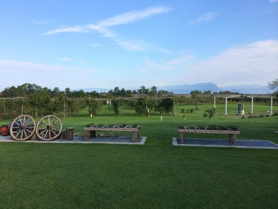 Massoni Bed & Breakfast: vineyards (great for a quick walk)