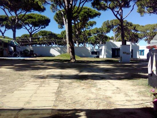 Camping Pinar San José: Vista desde la parcela