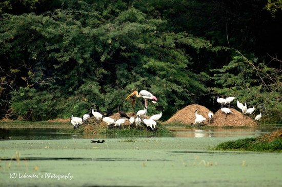 Sultanpur National Park Bird Sanctuary: Birds near water body