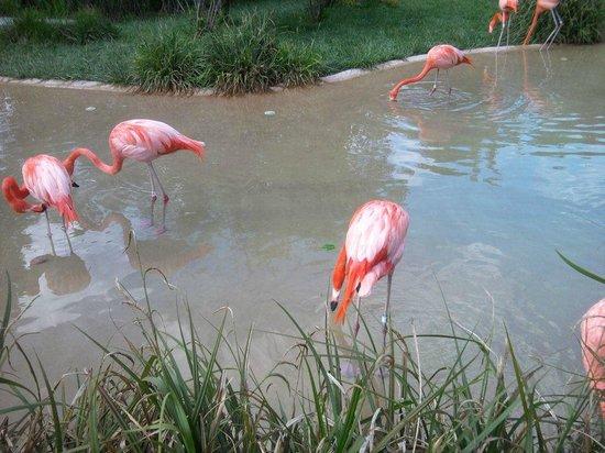 Nashville Zoo: View of the flamingos