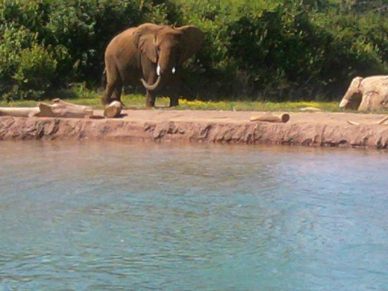 Nashville Zoo: A different view of the  elephants
