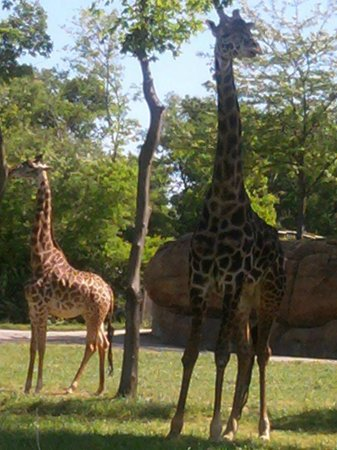 Nashville Zoo: One of the many fiews of the giraffes