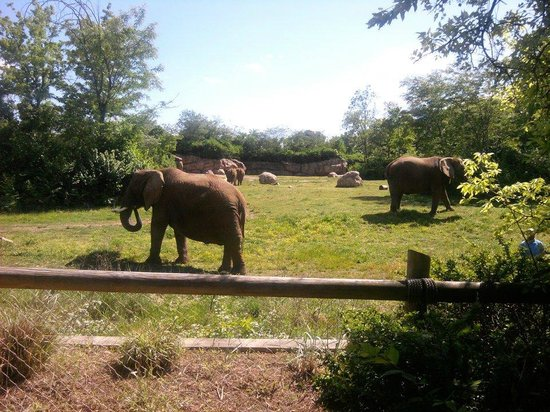 Nashville Zoo: Just one of the views for the elephants