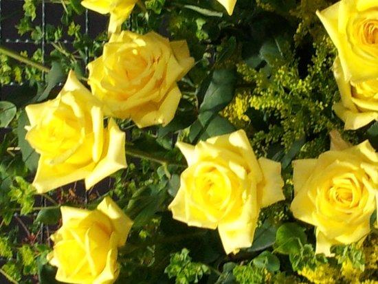 Festa de Flores e Morangos de Atibaia: flores
