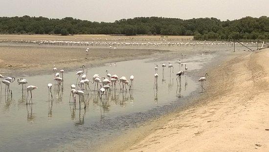 Ras Al Khor Wildlife Sanctuary: June 2014
