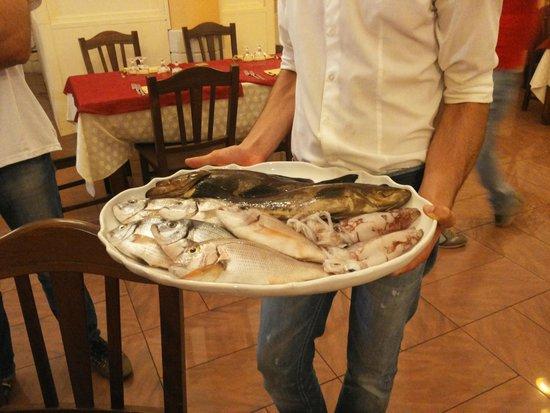 Finibus Terrae: Pescato del giorno