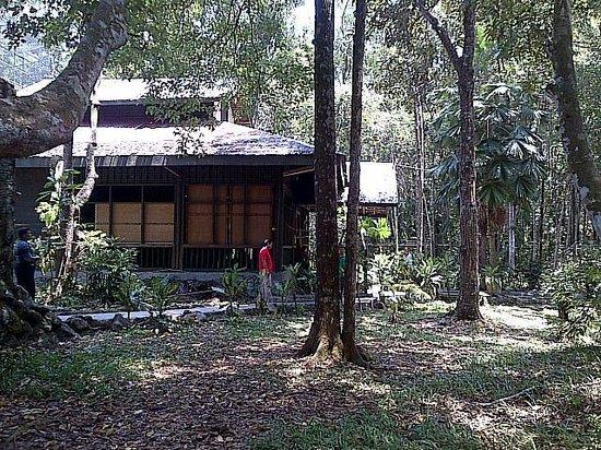 Kawasan Arboretum Nyaru Menteng