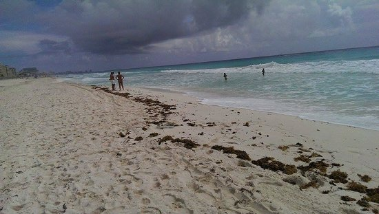 Seaweed on the beach - Picture of Iberostar Selection Cancun, Cancun