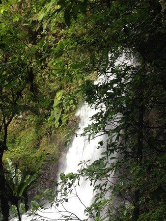 Maravu Taveuni Lodge: waterfall trip