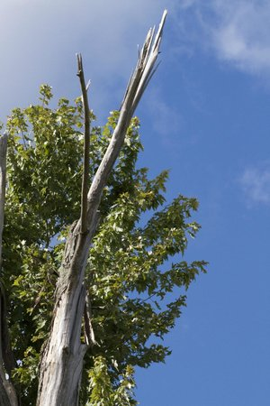 Oak Openings Preserve: The recovery of nature following the tornado of 2010.
